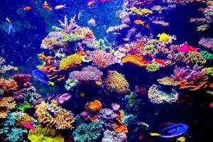Fidschi Korallen