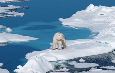 Eisbär auf einer Eisscholle - Naturerlebnisse im hohen Norden