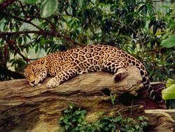 Exotische Tierwelt auf einer Amazonas Reise entdecken