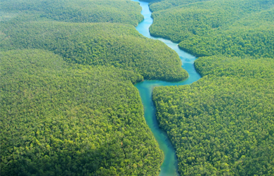 Regenwald Fluss