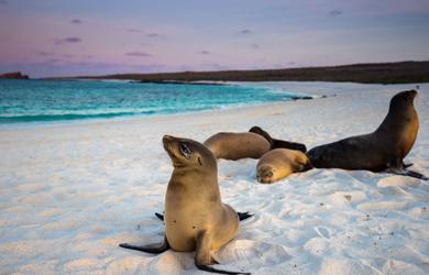 Tierwelt der Galapagos Inseln in Ecuador, Südamerika
