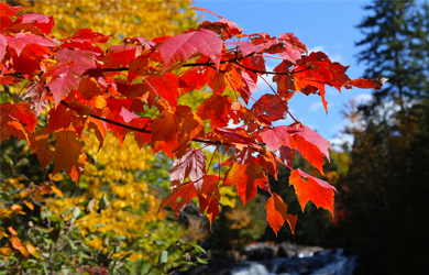 leuchtende Blätter in Kanada