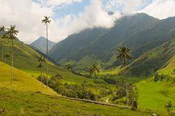 Grünes Kolumbien