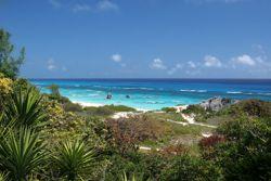 Atlantik-Insel mit tausenden Palmen